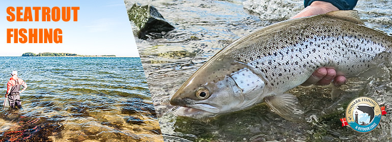 Sea trout fishing at our lodge. A nice sea trout from Fyn